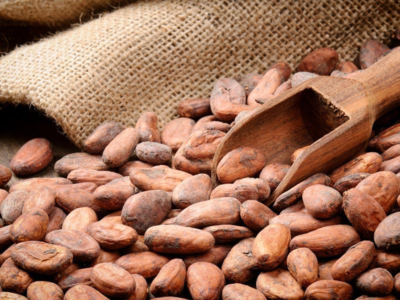 Superaliments en gros de cacao